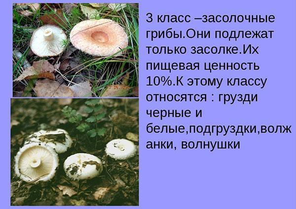 засолочные грибы