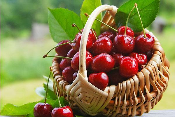 умеренное потребление вишни