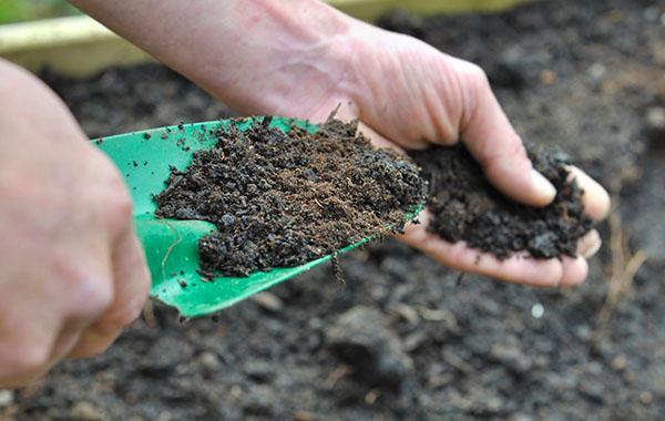 подготовка почвы к посадке хрена