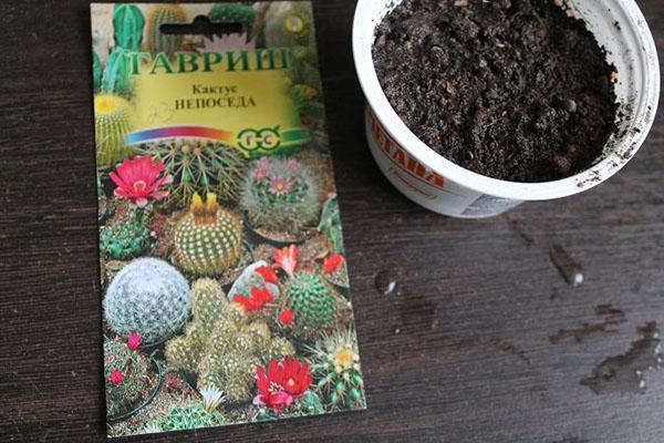 посев семян мимулюса