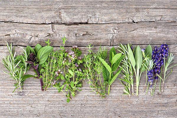 травы с полезными свойствами