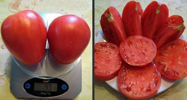 мясистые плоды томата