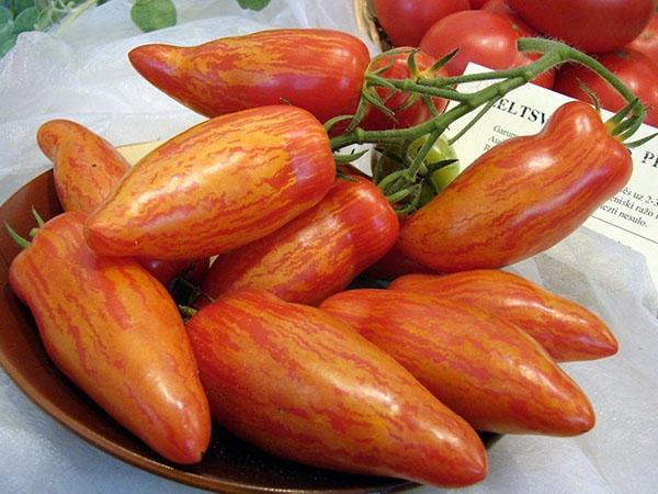 томат полосатый