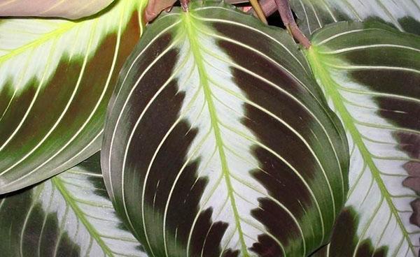 градация цветовой гаммы листа