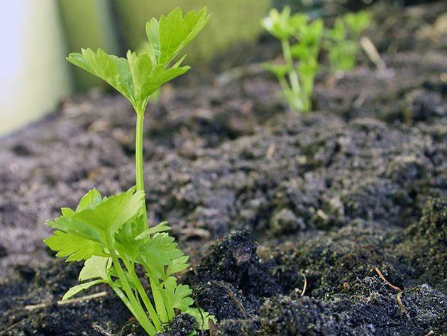 крепкие растения
