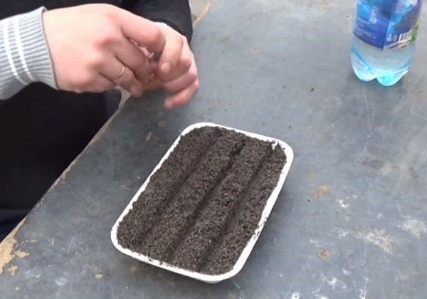 емкость для высева семян