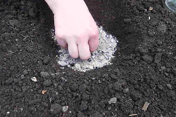 подготовка грунта к посеву люпина