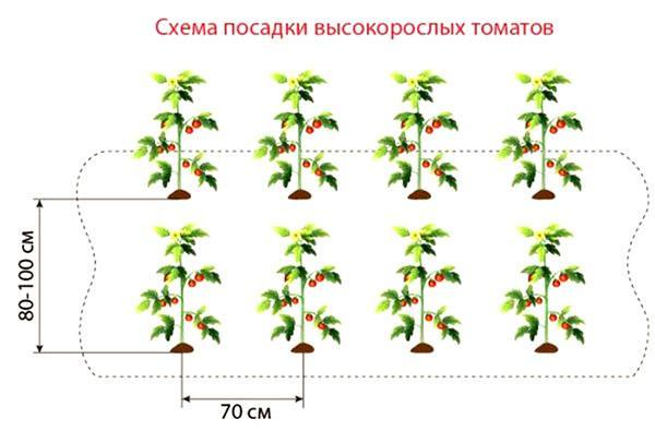 посадка высокорослых томатов