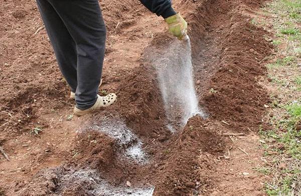 применение селитры перед посадкой картофеля