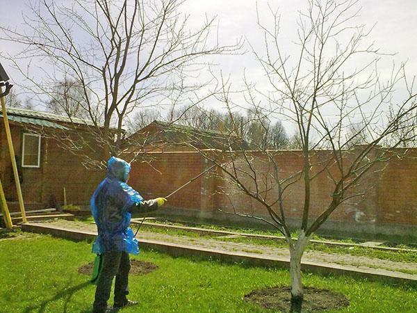 обработка сада карбамидом весной