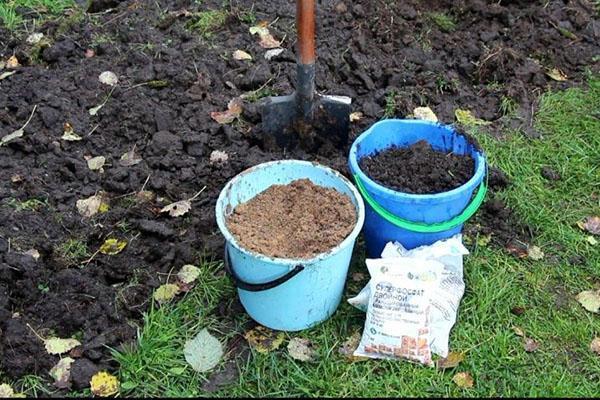 подготовка почвы для лука осенью