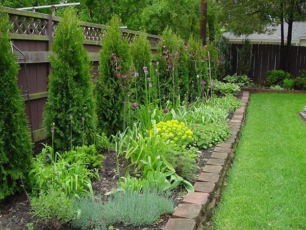 сочетание разных растений