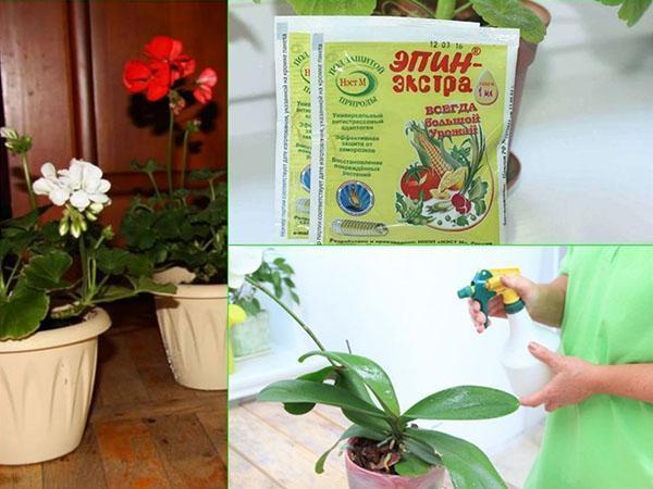 Эпин Экстра для комнатных растений