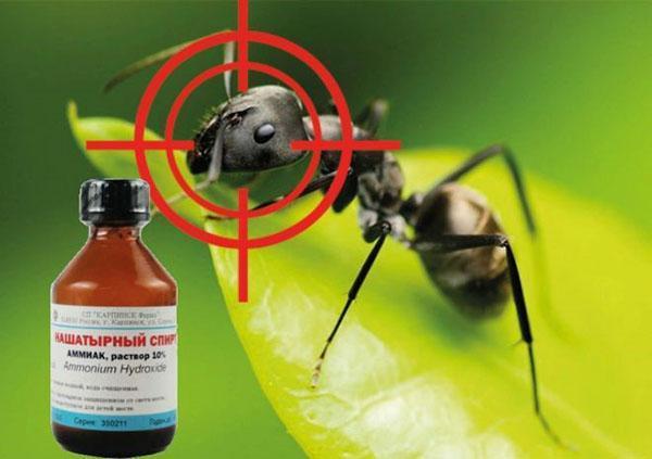 нашатырный спирт против муравьев