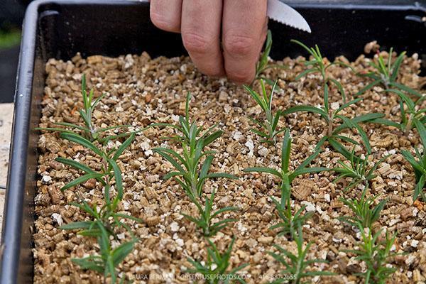 Вермикулит для растений как применять эффективно