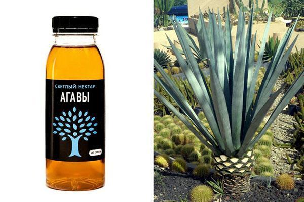 агава для наружного применения
