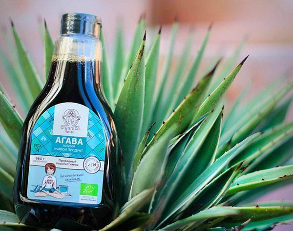 лечебное средство из агавы
