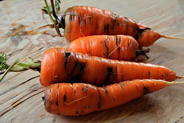 поврежденная морковь
