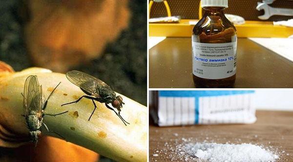 народные средства борьбы с морковной мухой