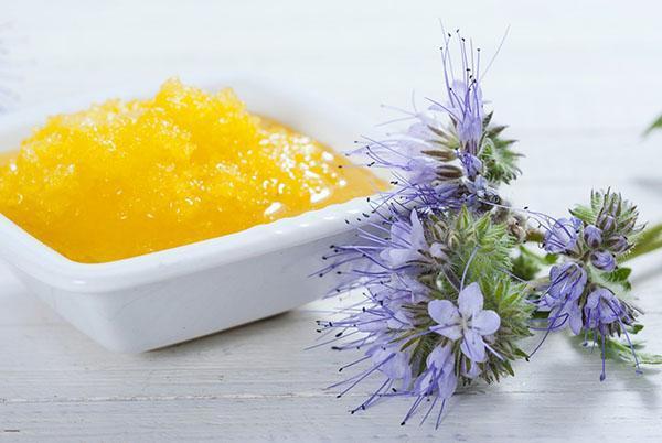 полезные свойства меда из фацелии
