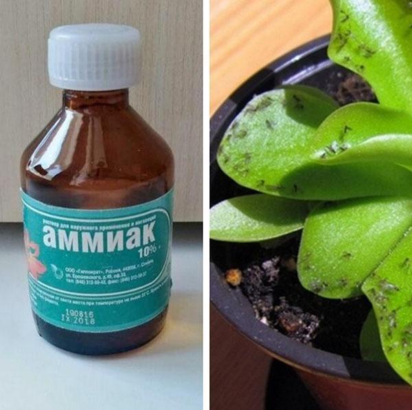аммиак для комнатных растений