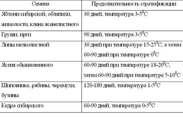 сроки стратификации семян
