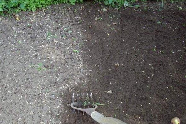 посев вики