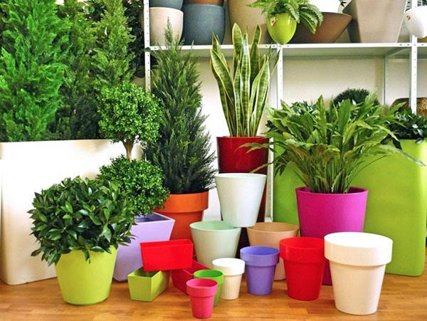 формы горшков для комнатных растений