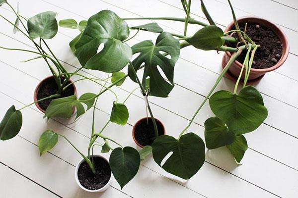 посадка молодых растений
