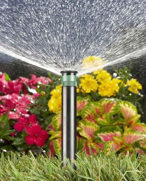 полив цветочной клумбы