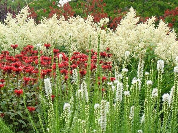 цветы на фоне волжанки