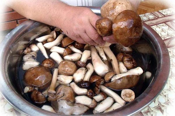 хорошо промыть грибы