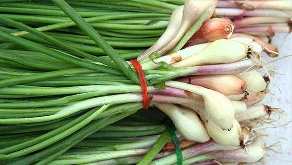 зеленый лук полезен не всем
