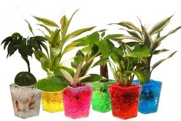 комнатные растения в горшках с гидрогелем