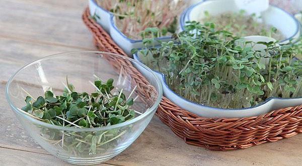 выращивание зелени в гидрогеле