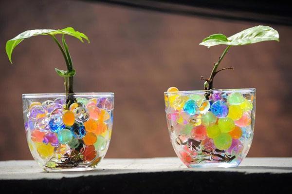 молодые растения в гидрогеле