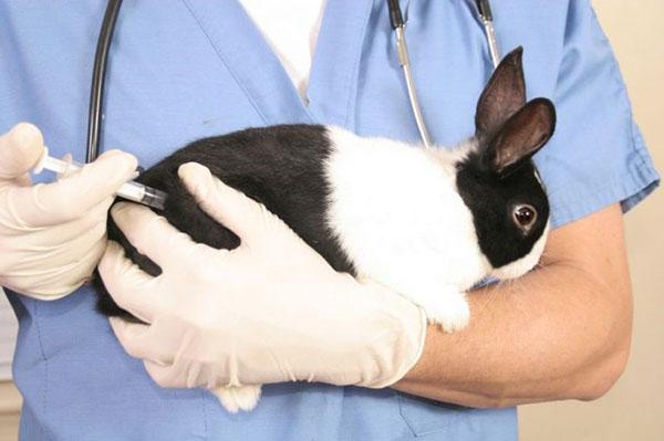 лечение кролика нитоксом 200