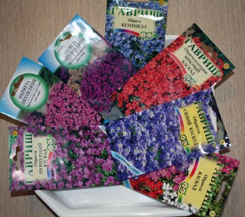 Как вырастить обриету из семян