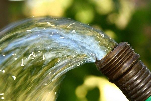 заливаем норы водой