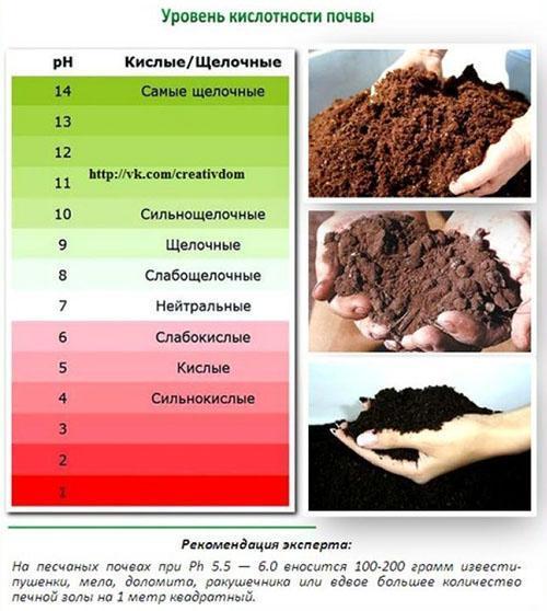 уровень кислотности почвы