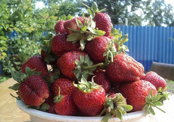 крупная сладкая ягода