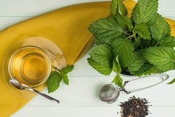 чай из мелиссы лекарственной