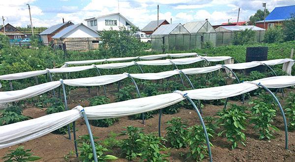 парник для выращивания овощей