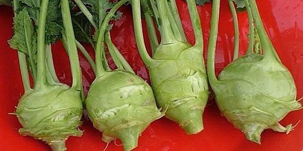 плод кольраби зеленого цвета