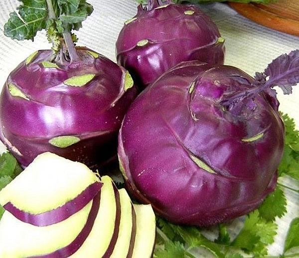 кольраби фиолетового цвета