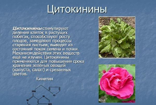 цитокинины