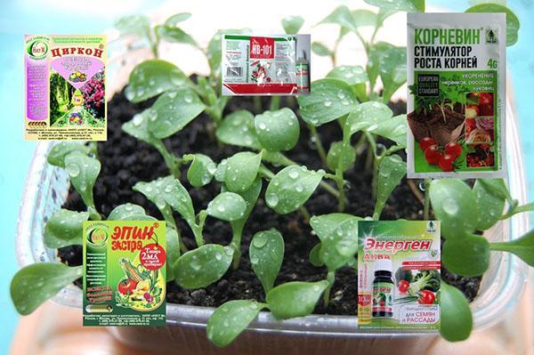 регуляторы роста для рассады растений