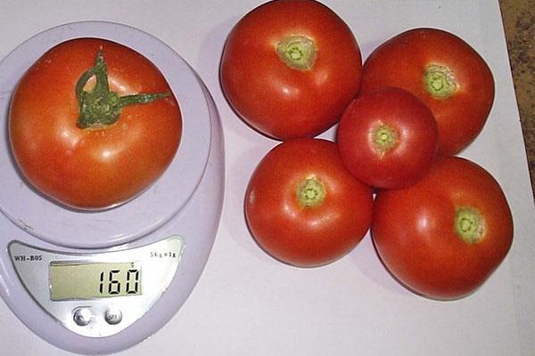 размер плодов сорта Катя