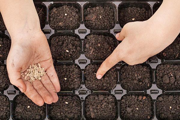 посев семян томата в кассеты
