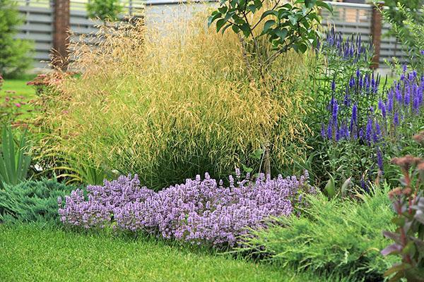 вероника в композиции с другими растениями